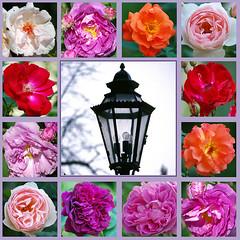 O Pfingstengrün, o Maienzeit (amras_de) Tags: blüte blume flor cvijet kvet blomst flower floro õis lore kukka fleur bláth virág blóm fiore flos žiedas zieds bloem blome kwiat floare ciuri flouer cvet blomma çiçek pfingsten pinkster pentecosta letnice pinse pentecost pentekosto pentecostés nelipüha mendekoste helluntai pentecôte duhovi pünkösd hvítasunnudagur pentecoste päischten sekmines vasarsvetki pinksteren zeslanieduchaswietego pentecostes rusalii turíce binkošti pingst hamsinyortusu laterne lampe lanterne lantern lyhty lanterna žibintas lantaarn