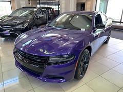 2019 Charger SXT (Smalltowntx87) Tags: brand new cars automotive dealership dodge chrysler fiat scat pack 2019 2018 charger challenger ta hemi 57 64 sublime pearl hellcat redeye 707hp b5 blue srt american muscle ram 1500 longhorn trucks plum crazy purple