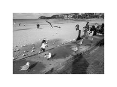 chasing seagulls, Manly beach, winter 2019  #957 (lynnb's snaps) Tags: 35mm cvultron35mmf2vintagemmo id11 ilfordhp5 leicacl manly bw blackandwhite film cvultron35mmf2vintagemmount 2019 winter manlybeach sydney australia leicafilmphotography rangefinderphotography rff people street beach ocean coast bianconegro biancoenero blackwhite bianconero blancoynegro noiretblanc schwarzweis monochrome ishootfilm filmfilmforever filmneverdie child children seagulls play