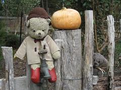 Paddington, Scout and the Gourd in the Garden of St Erth 1. (raaen99) Tags: paddington paddingtonbear paddybear paddy teddy teddybear bear softtoy vintage vintageteddy vintageteddybear vintagetoy handmade softie plush cute cuddly soft scout scoutbear cuddle hug littlebearhug biglittlebearhug knitting knitted knittedtoy fairtrade fairtradebear scouthouse gardenofsterth sterth sterthgardens sterthhouseandgardens simmondsreef diggersclub diggers diggersgardeningclub diggersgardenclub gardeningclub gardenclub garden blackwood victoria australia grounds houseandgardens imaginaryhorsel tap metal game pretend imagination autumn gourd fence post gate wooden