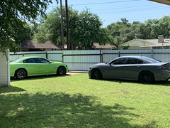 IMG_2549 (Smalltowntx87) Tags: 2019 dodge charger scat pack automotive dealership brand new car sublime green pearl 392 hemi 64 57 iphone xs max fiat chrysler 485hp srt