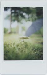 sun came out after rain (breeze.kaze) Tags: instant film fujiinstaxminifilm tlrcamera mintinstantflextl70 rained mushroom umbrella