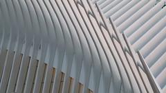 A17764 / calatrava's oculus (janeland) Tags: newyorkcity newyork 10007 lowermanhattan financialdistrict oculus wtctransportationhub architecture architecturaldetail santiagocalatrava architect sooc lateintheday abstract may 2018