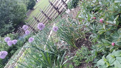 Auch im Garten gedeiht es