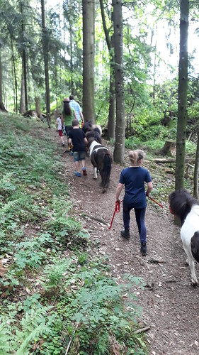Ponywanderung morgens