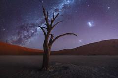 Vogue (Ryan Dyar) Tags: tree desert ryandyar magellanic galaxies galaxy milkyway astro night deadvlei africa namibia