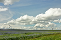 Flax & Pylons (Mike.Dales) Tags: blue windturbines seamer northyorkshire landscape cornflower flax linseed