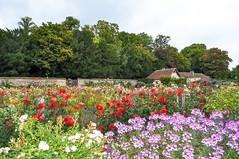 Les jardins de Bouges le Château (balese13) Tags: 1855mm bougeslechâteau d5000 indre nikonpassion yourbestoftoday balese centre château nikon flower fleur 500v20f 1000v40f 1500v60f