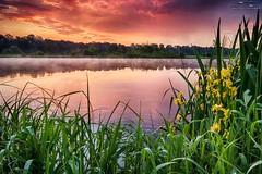 IMG_8929 (Artur Surgał) Tags: polska wschódsłońca krainabugu nadbużańskiparkkrajobrazowy widok krajobraz rzeka bug mgła chmury canon irix15mm irixlens poland sunrise river clouds scenery landscape colorful