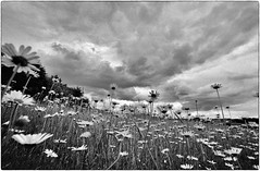 himmelsgucker (jo.sa.) Tags: landschaft lebensraum himmel wolken bw wiese schwarzweiss analog analogefotografie kleinbild silvermax