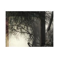 Shadows and lights. Barcelona. 2013  ( Edition 2019 ) (José Luis Cosme Giral) Tags: urbannature canon abstraction branches barcelona cataluña textures walls shadowsandlightsbarcelona2013edition2019