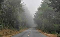 Mattole Road (lotosleo) Tags: california ca road fog forest trees crossamerica2018 vanishingpoint landscape ferndale mattoleroad lostcoast