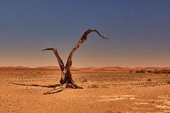 Dry season (flowerikka) Tags: africa desertedge dry dryseason holz landscape light lonely namibia silence sky sonne sun wood wüstenrand tree baumstamm