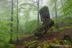 OREKA (II) (Obikani) Tags: forest season urbasa nature mist light beautiful landscape background natural navarre tree navarra magic morning foggy leaf fog nafarroa wood park branch beech foliage misty green environment beauty scenery scene view mood spring mystery country euskal woods autumn outdoor color herria basque wet summer fall tranquil