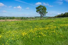 Greensand, Bedfordshire (Ken Barley) Tags: bedfordshire churchmeadow greensand maulden