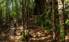 Mount Gnomon Trail, Tasmania