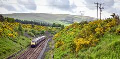 43152 passes Gleneagles (robmcrorie) Tags: 43152 hst high speed train inter city 125 scotrail 1z10 nikon d850 broom flower gleneagles scotland