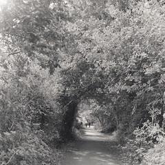 (Attila Pasek (Albums!)) Tags: analogue bw bronicasqa pathway delta mediumformat people camera 120film 400 blackandwhite ilford film walk