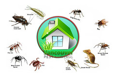 pest in vancouver (vancouverpestcontrolltd) Tags: pest pests wasp rodent rat cockroach bedbug bug pestcontrol vancouver canada