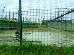 Tiger (Going to the Zoo with Trebaruna) Tags: safariravenna ravennasafari ravenna safari italy italia 2019 zooravenna 05042019 enclosures enclosure zoo