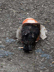 They Call Them Flying Rats (Steve Taylor (Photography)) Tags: pigeon cigarette butt takeaway container flyingrat chinese bird street black grey orange stark sad cardboard uk gb england greatbritain unitedkingdom rubbish trash london