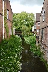 WaterUnderTheBridge (Hodd1350) Tags: wimborne wimborneminster dorset bridge stream buildings windows plants brickwork water leica leicaq