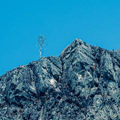 WhereThere's a Will! (iainmerchant) Tags: art artoflife iainmerchant photography theartoflife thinkingoutloud thoughtprovoking wales panasonic picoftheday photooftheday places welsh landscape landscapes lumix gx8 mirrorless ffestiniog blaenau nature natural naturephotogrpahy rocks trees tree flora