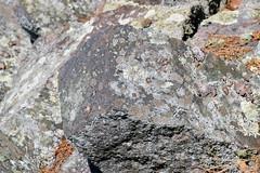 lichen-crusted boulder (ophis) Tags: lichen bluehill bluehillgraniteporphyry