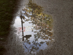 Tomber les directions (Jay/Be) Tags: grue building construction reflection flaque water eau sol ground arbre nature tree projection crane puddle