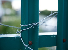 20190606-019.jpg (deeceei3) Tags: protection danger sharp border abstract wire background metal fence private doncaster barb green iron stop barbed steel horizontal barrier security