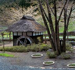 The water mill (lebre.jaime) Tags: japan 日本 kawabamura 川場村 counryside watermill analogic film120 mf mediumformat 6x6 fujifilm reala iso100 hasselblad 503cx planar cf2880 epson v600 affinity affinityphoto tree