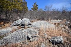 ledge with little bluestem (ophis) Tags: bluehill bluehillsreservation canton bluehillgraniteporphyry