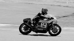 Moto Légende 2019 (Laurent Quérité) Tags: motolégende motoancienne moto canonef100400mmf4556lisusm canoneos7d canonfrance circuitdijonprénois dijon france 2roues noirblanc blackwhite monochrome triumph