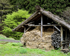 The shack (lebre.jaime) Tags: japan 日本 kawabamura 川場村 counryside shack analogic film120 mf mediumformat 6x6 fujifilm reala iso100 hasselblad 503cx planar cf2880 epson v600 affinity affinityphoto tree