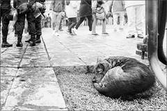 The dog´s life in Lima II (Eva Haertel) Tags: eva haertel canon5dmarkiii reisen travel peru lima stadt city strase street menschen people polizisten policeofficers hund dog schlafen sleep strasenszene streetscene schwarzweis sw blackandwhite bw animal