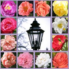 O, Heilig Geist, ein Gott und Herr (amras_de) Tags: blüte blume flor cvijet kvet blomst flower floro õis lore kukka fleur bláth virág blóm fiore flos žiedas zieds bloem blome kwiat floare ciuri flouer cvet blomma çiçek pfingsten pinkster pentecosta letnice pinse pentecost pentekosto pentecostés nelipüha mendekoste helluntai pentecôte duhovi pünkösd hvítasunnudagur pentecoste päischten sekmines vasarsvetki pinksteren zeslanieduchaswietego pentecostes rusalii turíce binkošti pingst hamsinyortusu laterne lampe lanterne lantern lyhty lanterna žibintas lantaarn