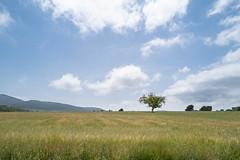 Alcoy, Parque Natural Font Roja, juin 2019 (nicolascroce) Tags: arbre champ plante ciel nature
