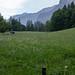 Alpine meadow, Trümmelbach