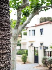 Sous surveillance (aandre001) Tags: arbres végétaux saintjean ruesavenues rues france architecture maison rue voyages plageesplanades laciotat borddemer maisonspiscine