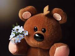 I remember you Teddy! (Through Serena's Lens) Tags: macromondays childhoodtoys flowers forgetmenot toy teddybear brownbear stuffedanimal darkbackground fluffy dof soft plush macro canoneos6dmarkii
