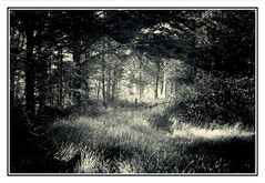 Waldlichtung / Forest clearing (Dirk Böhling) Tags: monochrome monochrom blackandwhite industar22 nature natur landscape trees
