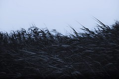 . (sugus.) Tags: wild wildgrass nikon nature blue green lonely
