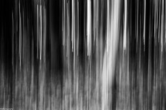 dark forest (fhenkemeyer) Tags: forest woods trees abstract icm cameramovement