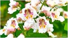 DSCF0149 (DrOpMaN®) Tags: fujifilm fujinon xe2 xc1650mmf3556ois m43turkiye captureoneprofujifilm korhankumral flowersplants
