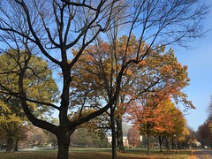 IMG_1673 (tombrewster6154) Tags: guilford college campus sunday thanksgiving weekend 2018 mmxviii late november autumn fall foliage trees ground road pavement grass beautiful colors fiery outdoor beauty natural nature curvy branches bark wood blue sky leaves fallen morning picture photograph photography lovely nice scenery pretty gorgeous stunning view signs background street lamp buildings red bricks shingle rooftops green barren