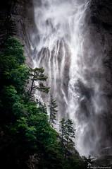 The fall (JimDel Photographies) Tags: fall cascade landscape paysage alpes alpinelight montagne moutains arbres forêt eau