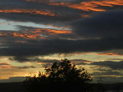 Sunset Colours, Inverness, May 2019 (allanmaciver) Tags: sunset inverness highlands scotland red orange tree silhouette dark clouds light evening allanmaciver