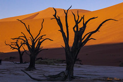"""Deadvle Dead Forest at Sunrise (Aaron (""""Ronny"""") Rentz) Tags: to do"""