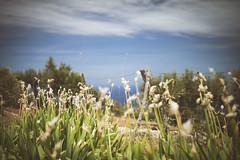 unsharpnes (janetfrerichs) Tags: urlaub mallorca spanien balearischeinseln mai2019 blue holiday green clouds 35mm nikon wind bluesky fullframe miramar unschärfe unsharpnes sigmaart