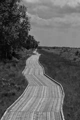 Long And Winding Path(or road) (RadarO´Reilly) Tags: ewigesmeer ostfriesland niedersachsen germany sw schwarzweis bw blackwhite blanconegro monochrome noiretblanc zwartwit landschaft landscape eversmeer